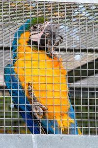 pappagallo agriturismo sant'orsola animali toscana