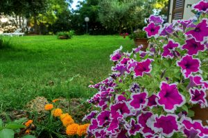 fiori e giardino a agriturismo sant'orsola follonica